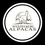 Wenzelberg Alpakas