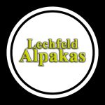 Lechfeld Alpakas